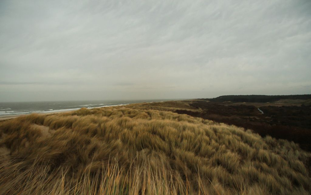 duinen.jpg