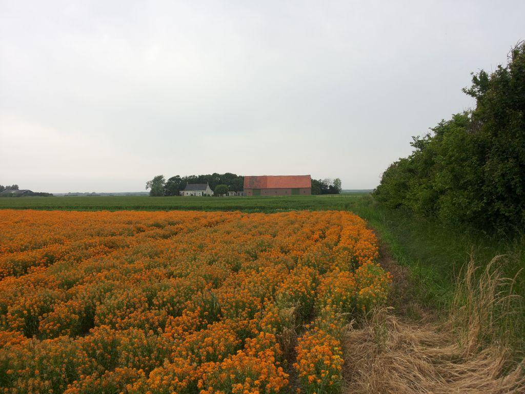 fiets-route-walcheren.jpg