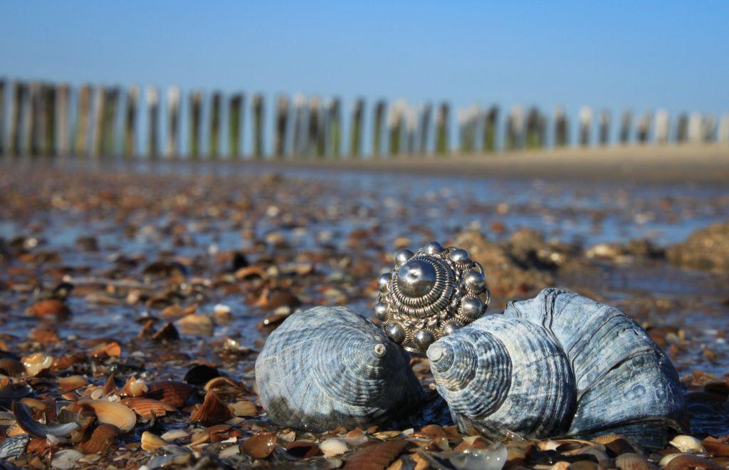 schelpen-in-zeeland.jpg